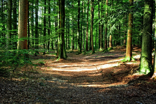 forest-972800_960_720