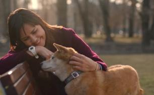 Thumbnail for - Компания Purina объявила о запуске общественного движения в поддержку животных