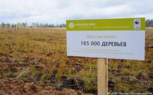 Thumbnail for - WWF России и Фонд Ив Роше восстанавливают лесные территории в Республике Алтай