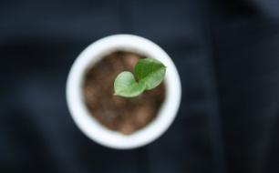 Thumbnail for - Скепсис, прозрачность и развитие: есть ли связь между открытостью компаний и устойчивым ростом
