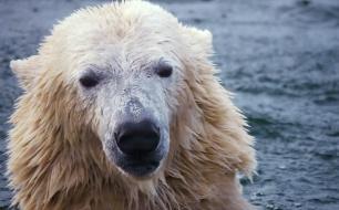 Thumbnail for - Группа компаний EXNESS поддержала работу WWF России по сохранению популяции белого медведя