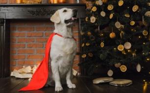 Thumbnail for - SELA запускает благотворительную акцию в поддержку кинологического центра по обучению собак-поводырей