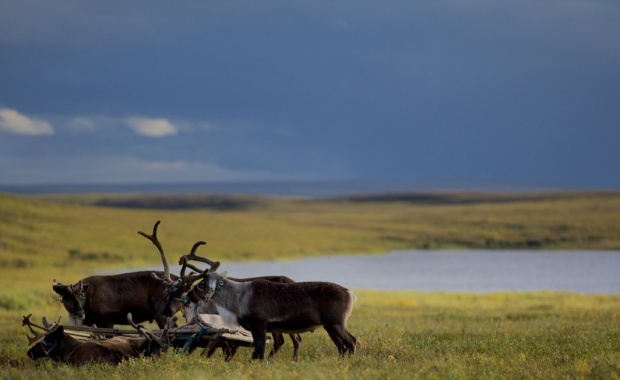 Thumbnail for - Круглый стол «Взаимодействие коренных малочисленных народов Севера РФ и промышленных корпораций. Экологическая и социальная ответственность»