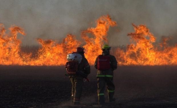 Thumbnail for - Гринпис России и онлайн-сервис Bookmate призывают сообщать о травяных пожарах